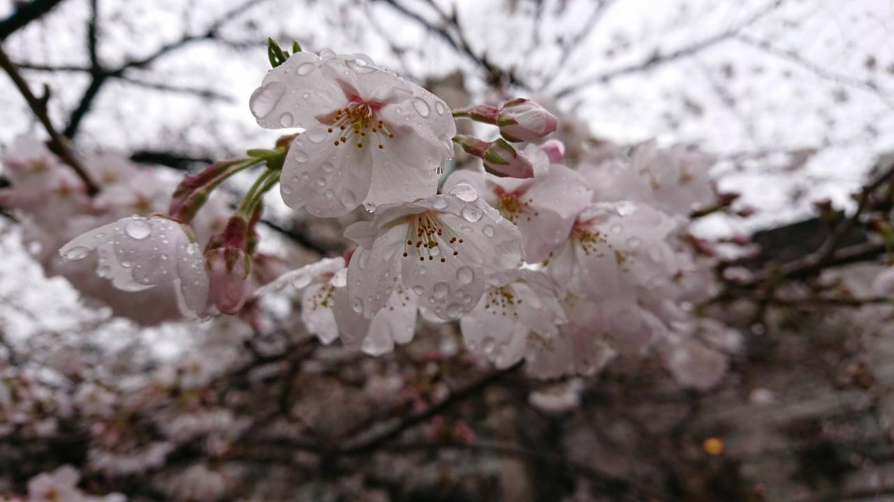 2019/4/6 ビリオネアクラブ2019 春のイベント【花見】